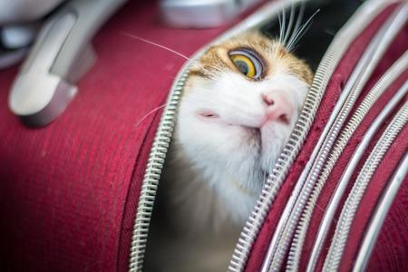 Cat in a trolley bag Standard-Bild