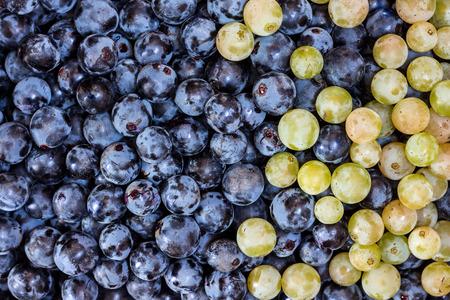uvas: Uvas de vino