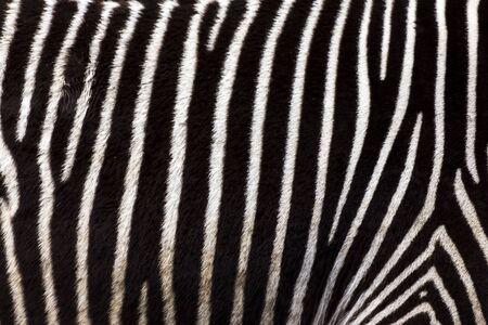 stripes: Zebra stripes