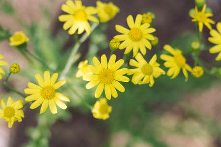 yellow wildflowers: Yellow Wildflowers