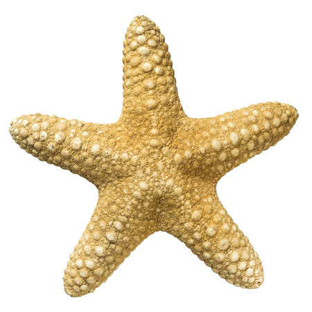 Top view of a starfish isolated on white