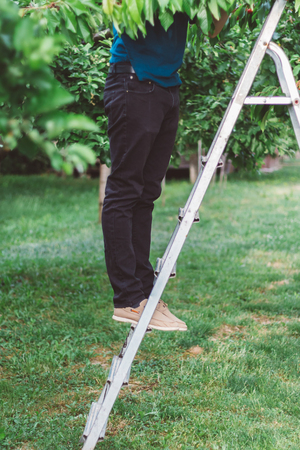 Cherry picking from a ladder