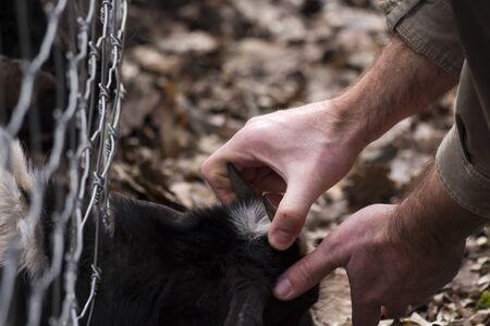 Rescuing an animal stuck in a fence Standard-Bild
