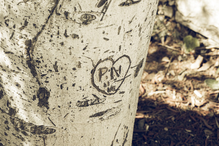 Close-up of word carved on bark of tree trunk in bright sunlight.