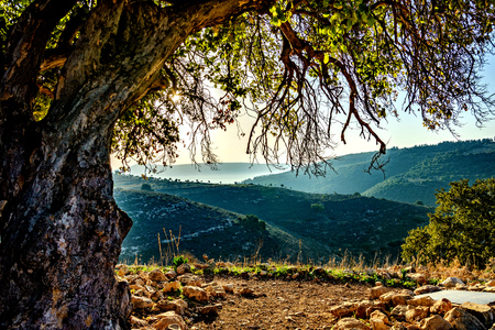 Picturesque view of hills behind old tree on sunny day. Stock fotó