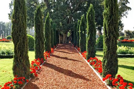 Beautiful blooming garden of tropical city