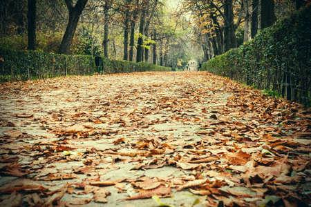 parque: Autumn view of Parque del Retiro, Madrid.