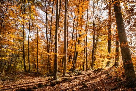 Grande e colorato autunno faggio paesaggio Archivio Fotografico - 23716535