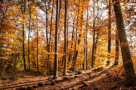 Great and colorful autumn beech landscape  Stock Photo