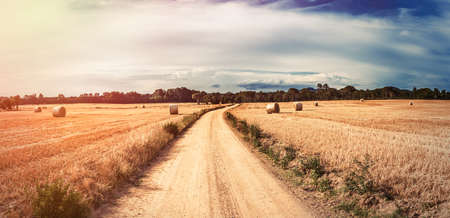 lonliness: Vintage landscape wheat field. Digital flare edition.
