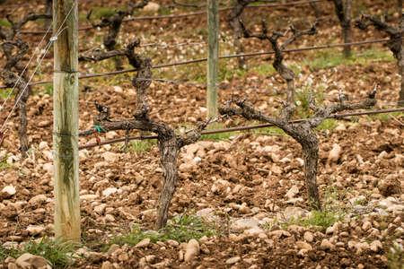 rioja: Winter vineyard landscape in Rioja, Spain.