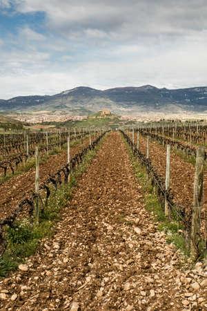 rioja: Vineyard landscape of Briones, La Rioja.