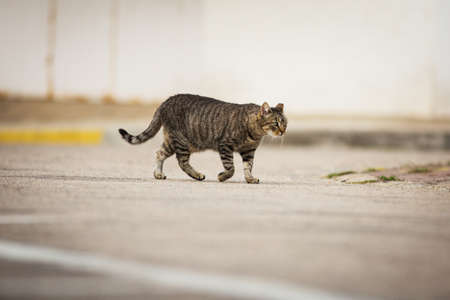 Abandoned cat walking down the street.