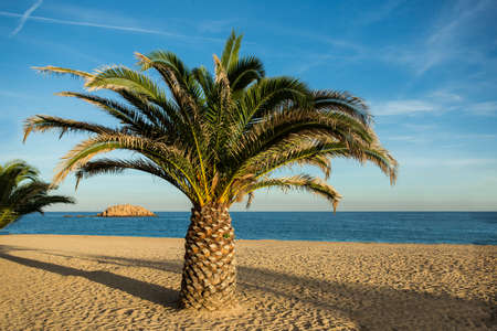 Relaxing view of a Palm in a empty beach in Costa Brava