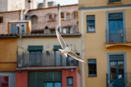 Seagull flying across the city of Girona. Archivio Fotografico