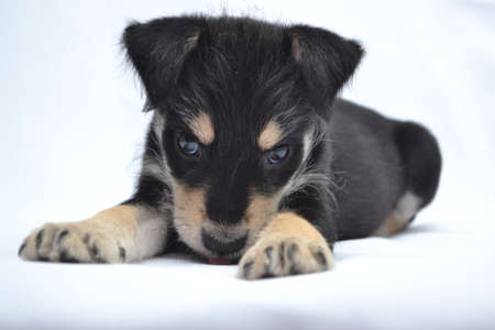 This is a cute puppy in the photo studio