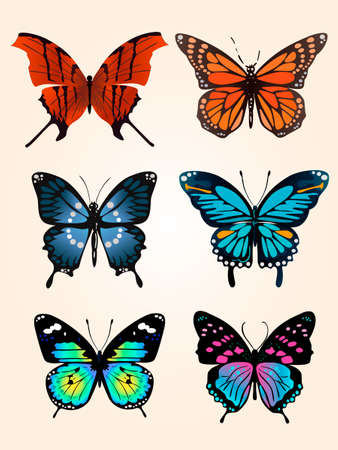 butterfly-three