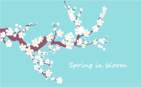 Cherry bloom illustration. Ilustrace