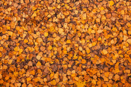 onset: Leaves that have fallen from the trees in the forest with the onset of autumn