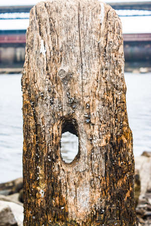 Textured fragments of a wooden dam on the lake. The old tree is covered with salt crystals and clams,