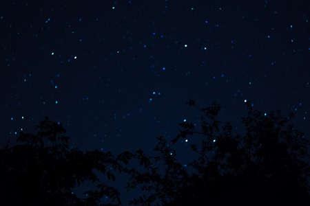 Long exposure night photo. A lot of stars with trees on foreground. Far from the city. Night landscape.