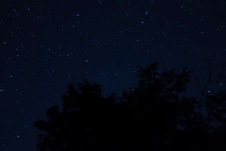 Long exposure night photo. A lot of stars with trees on foreground. Far from the city. Stock Photo