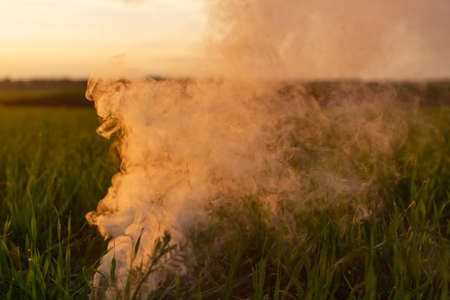 Big strikeball smoke grenade in young wheat. The white smoke in grass against evening sun. Sun position on horizon. Imagens