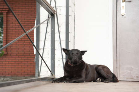 guard house: BLACK DOG IS WITH porch of the house, to guard the house, confident look DOGS Stock Photo