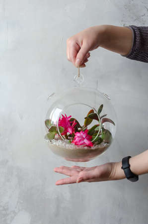 Womens hands hold a mini-juicy garden in a glass florarium against a white wall 스톡 콘텐츠