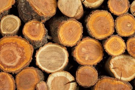 Tronc d & # 39 ; arbre plié Banque d'images - 88243313