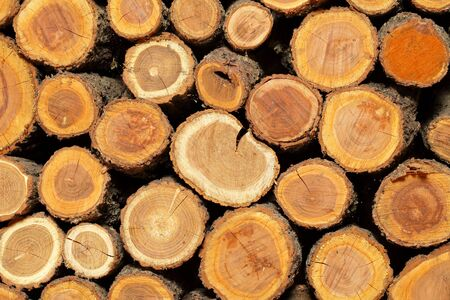 sawn: Sawn logs and wood prepared for use in construction or heating