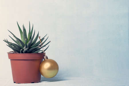 on a yellow-blue background there is a pot with a plant (haworthia), with a yellow ball hanging on it. Stock Photo