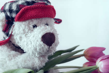 A white Teddy bear in a red hat with crimson tulips. Greeting card concept
