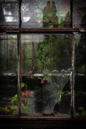 Rusty windows of the old abandoned greenhouse