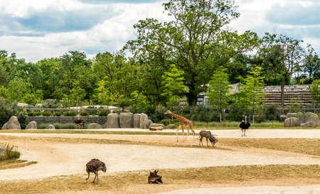 savanna: African savanna with giraffe ostrich antelope