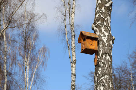 Birdhouse in the birch forest for birds