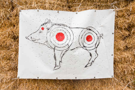 target shooting: target shooting with a picture of a wild boar