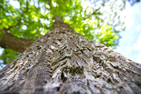 the view from below: tree trunk view from below Stock Photo