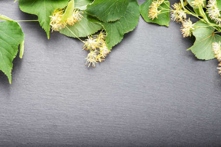 linden blossom: blossoming linden branch on slate board. there is a place for text