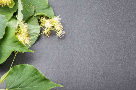 a place for the text: blossoming linden branch on slate board. there is a place for text