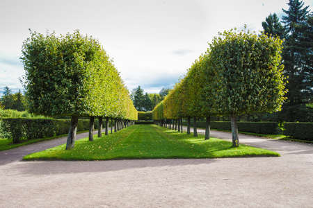 beautiful summer park with topiary trees, lawn and path to walk