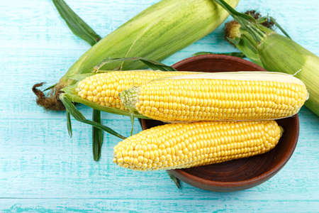 raw corn in a clay plate on a blue background.Place for text 写真素材