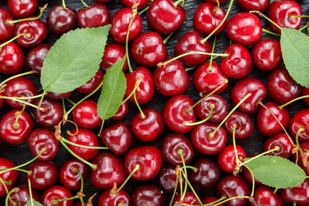 harvest ripe cherries, many berries are scattered as a background, space for text  Stock Photo