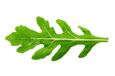 One leaf of arugula on a white background isolated.