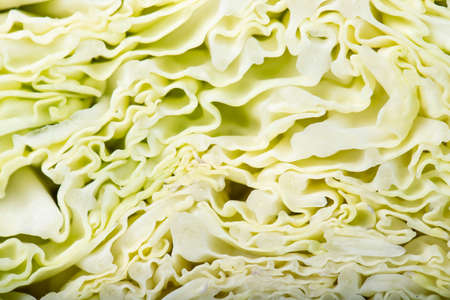 Savoy cabbage in a cut close-up. Vegetable background