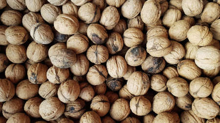 a lot of walnuts harvest. nuts in the shell. scattered as a background. place for text