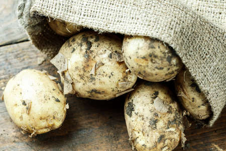 dirty young potatoes on the table, on wooden background, in burlap. place for text