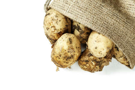 young potatoes with the remains of soil on a peel in burlap. heap isolated on a white background. spate for text