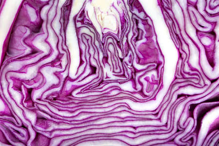 cut half of purple cabbage. the texture of the vegetable is clearly visible. place for text