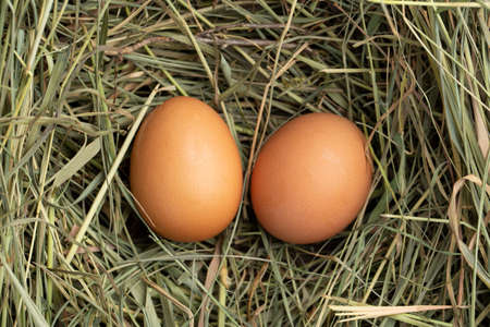 The lifestyle of the farm in the countryside, fresh eggs from the farm in the countryside